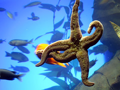 starfish_dance01.jpg