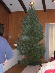 Big Christmas Tree, 2005