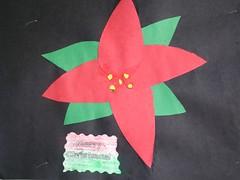 Poinsettia -Flor de Nochebuena