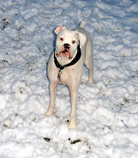 snowdogs0001