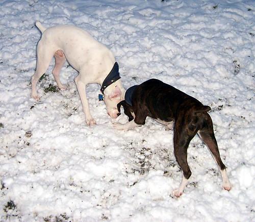 snowdogs0004
