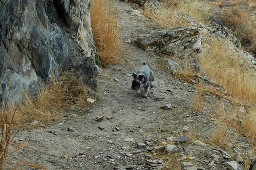 Nickey headed up the trail to Lovelock Cave, Happy Furry Friday
