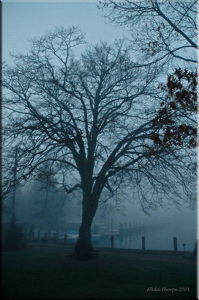 Linden Tree in Fog
