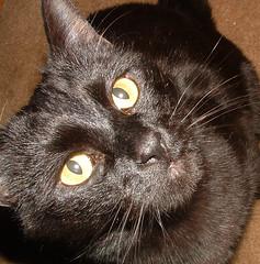 Oscar: black cat