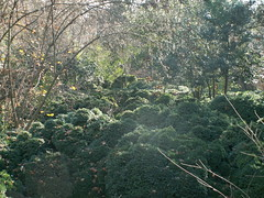 Jardin de la Alhambra. Uno de ellos.