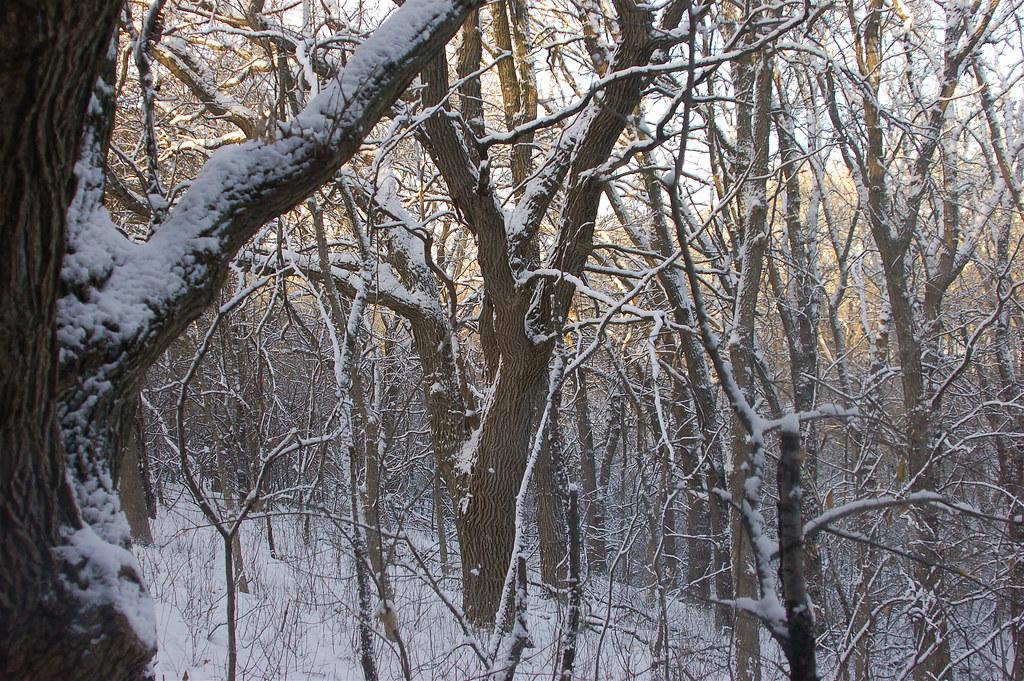 winterwindow 5