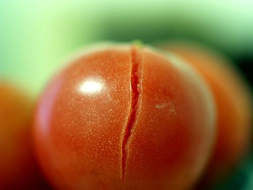 爛蕃茄 002-1