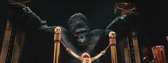金刚-大猩猩被锁在舞台上,假女主角被升上来