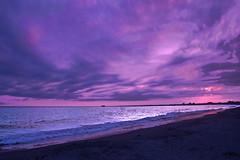 lavendar skies