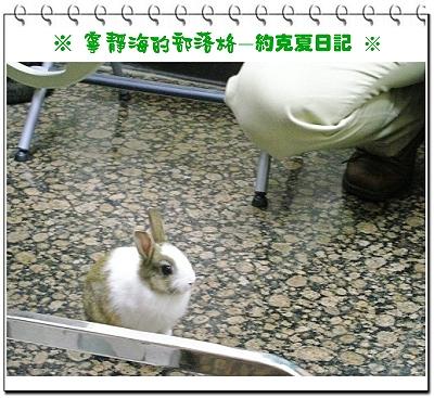 約克夏日記_20051220_跑動觀察
