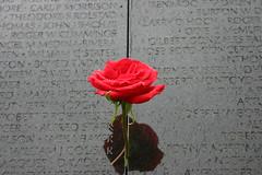 il muro del Vietnam memorial