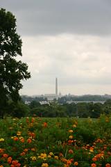 in lontananza, il Lincoln memorial, il mausoleo di Washington ed il Capitol