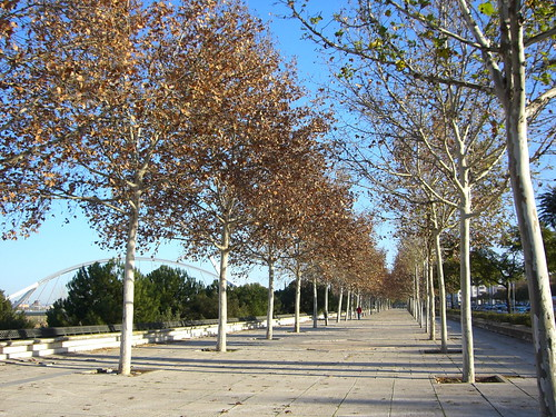 Paseo Barqueta