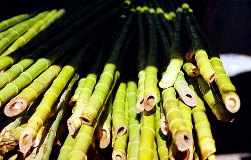 bamboo at a factory in Costa Rica