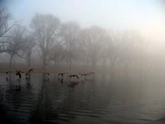 Foggy DC
