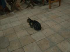 Cat in Perquin