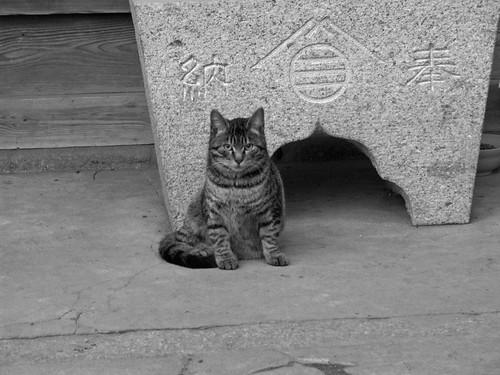 Cat 060119 #03