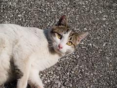 Cat 060122 #01