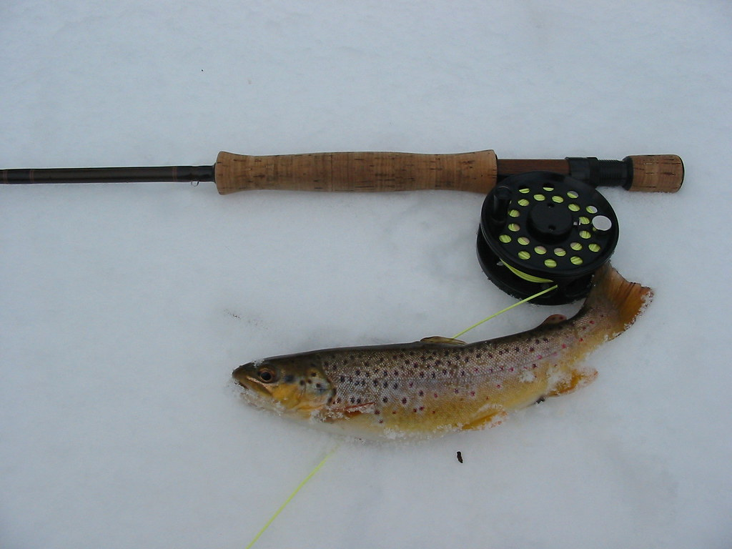 A very nice 'Secret Creek' brown trout
