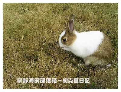 約克夏日記_20060214_草地洗臉
