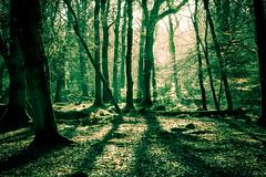 Rhinefield shadows photo by catkin314