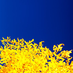 Yellow on Blue photo by Warriorwriter
