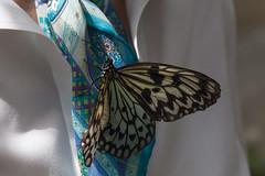 A Friendly Paper Kite photo by Bob Decker