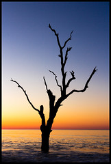 Ghost Tree photo by EML.photography