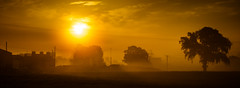 Misty morning Sun photo by duanebryars