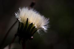 Striking Hair photo by Drachenfanger