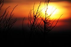 Plant Silhouette photo by Dan Martins1