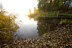 golden mist II photo by Andreas Hagman