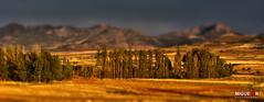 Campos de oro. / Fields of gold. - El Sabinar - Moratalla photo by Miguel Angel SGR