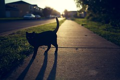 Black Cat Crosses My Path photo by DavioTheOne