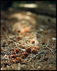 Pine cones | Idaho Springs | Pentax 6x7 105mm 2.4 medium-format film | Kodak Portra 800 @ ISO 1600 photo by *AndrewYoungPhoto* (writing_with_glass)
