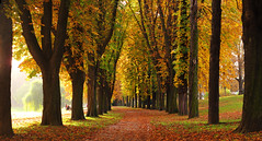 Chestnut-lined Avenue in Autumn photo by Batikart