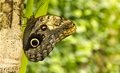 Butterfly eye Nikon D7000 photo by (RayH)