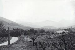 1944- Provence - rte vallon des Borrels-axe 2e Brigade vers Gapeau - Au fond Mont Redon et  Coudon- Col Part- Paul Gaujac