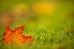 Autumn leaf II photo by generalstussner