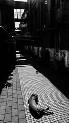 20140409-P1090711.jpg photo by tomfox