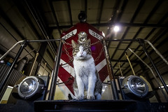 Shop Cat photo by LRF96