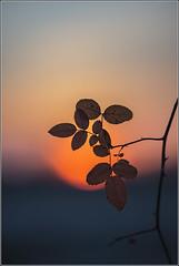 first sunset 2014.01.01 photo by 47gigi