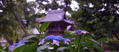 On a rainy day in June photo by Mitsu-chan
