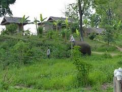 Laos - éléphants