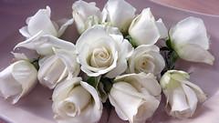 008353 White Roses photo by Ria en Reinier