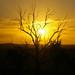 setting sun 14