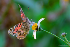 Llegan las Mariposas photo by ruben gobetti