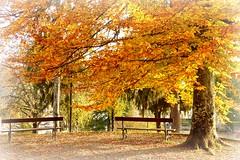 ¡Ya está ahí el otoño! photo by caminanteK