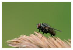 Lo zampino di mosca photo by Outlaw Pete 65