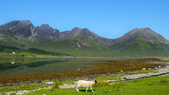 Landscape with Lamb (Isle of Skye, Scotland. Gustavo Thomas © 2014) photo by Gustavo Thomas